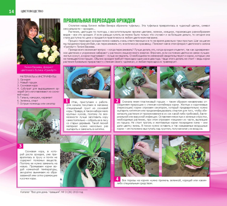 Фотоурок по пересадке орхидей Клуб любителей орхидей 39