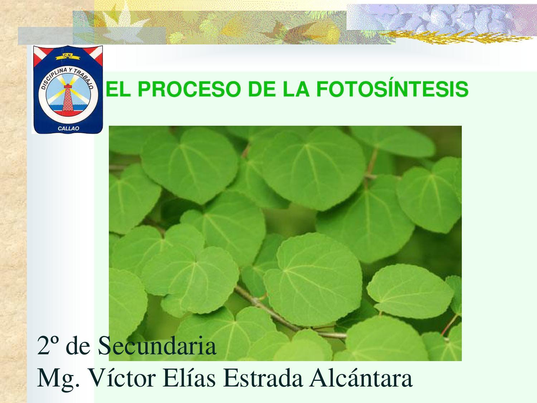El proceso de la fotosintesis en la noche 45