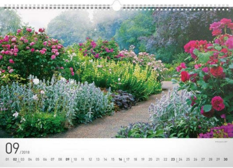 Сад с однолетними цветами фото