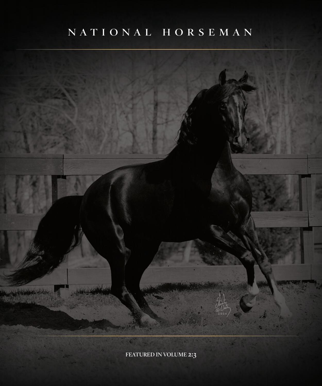 Black arabian horses wallpaper