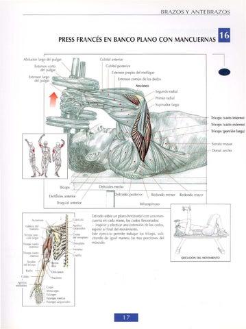 guia de movimientos de musculacion by cesar perez issuu