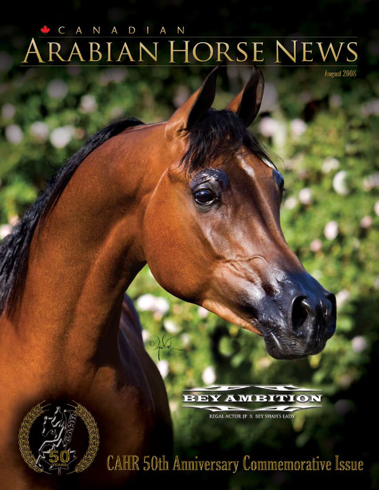 August 2008 By Canadian Arabian News Issuu