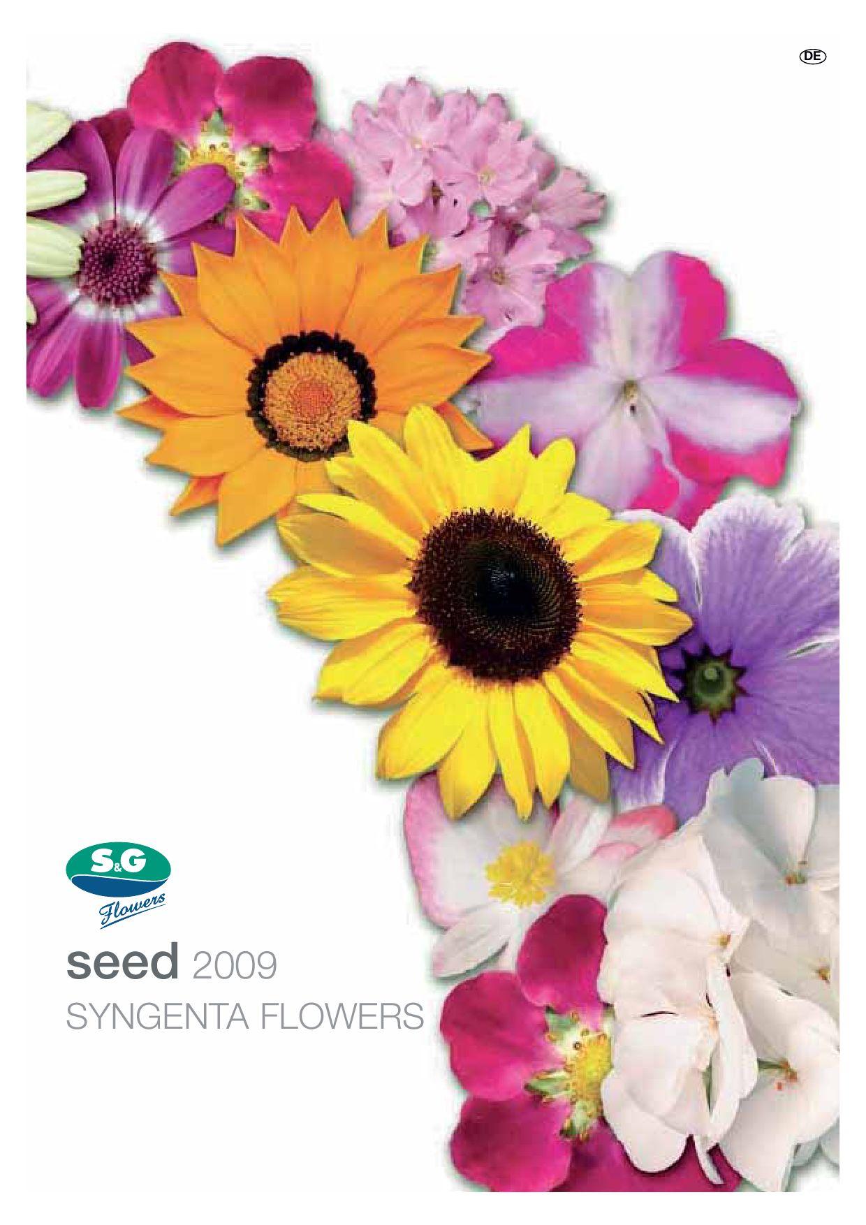 lavendelblau lila Petunie – große Blüten 50 Samen