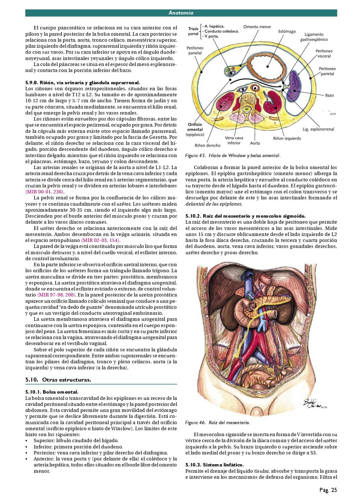 Fantástico J Bolsa Anatomía Molde - Anatomía de Las Imágenesdel ...