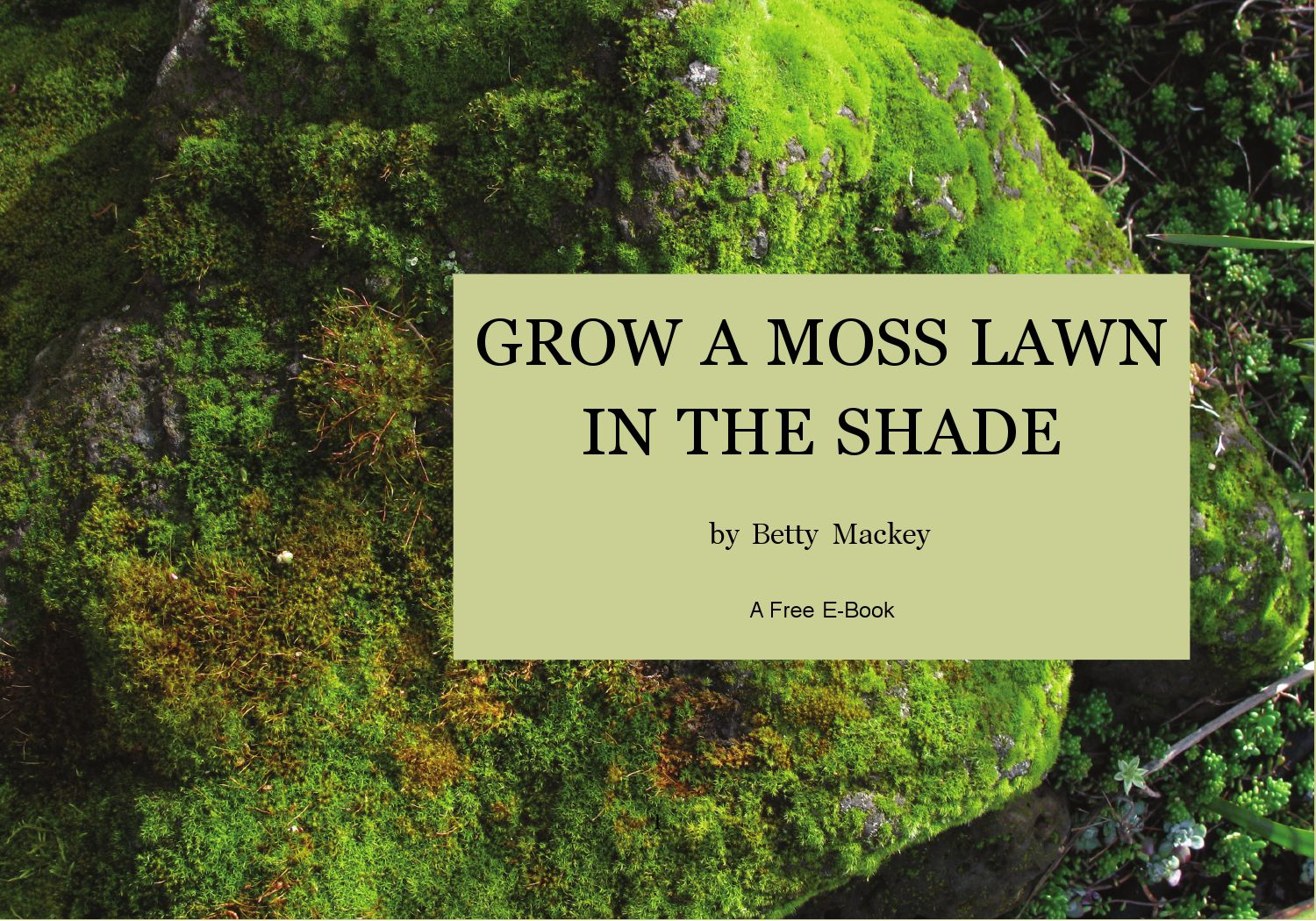 Grow A Moss Lawn In The Shade By Betty Mackey Issuu