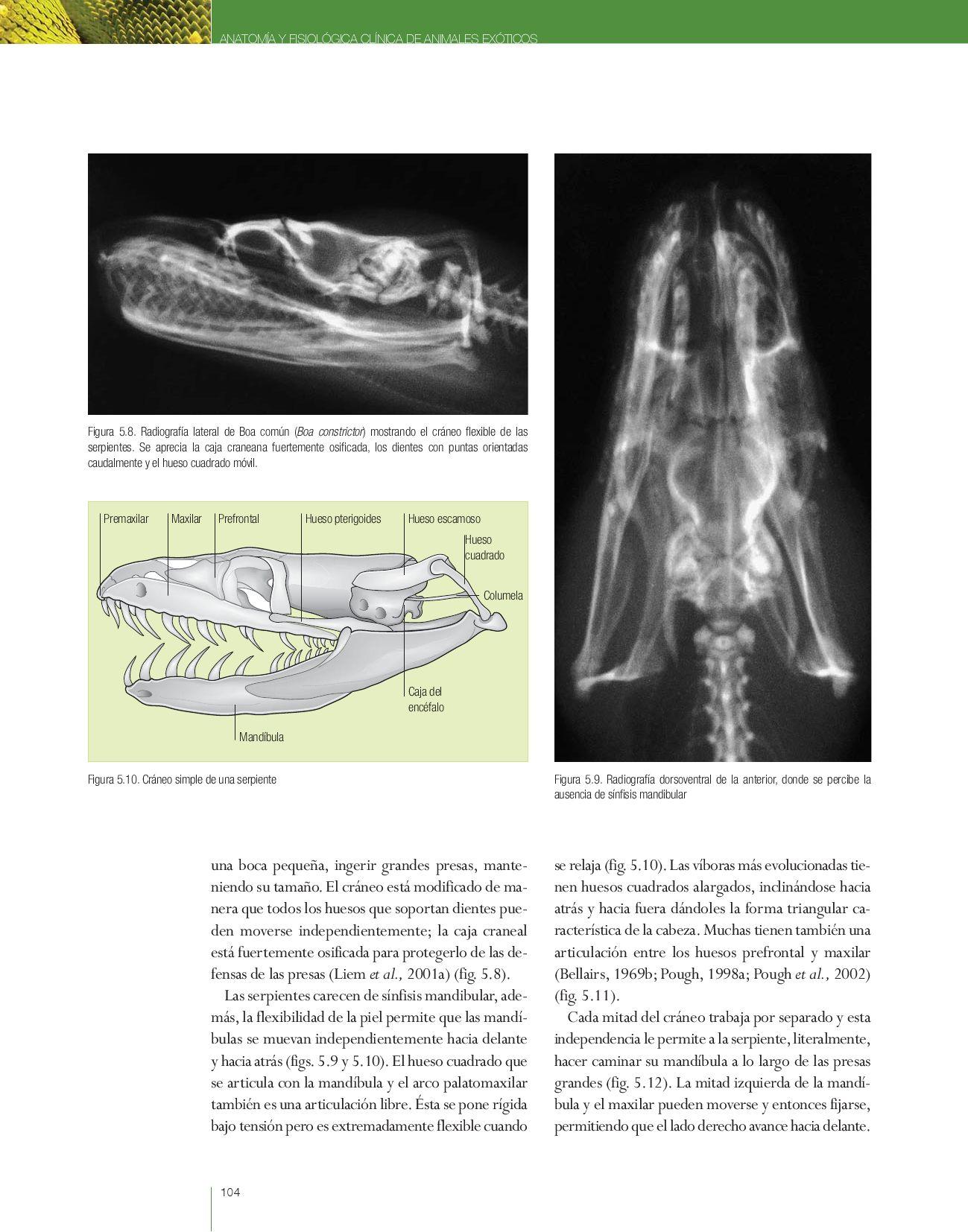 Anatomía y fisiología clínica de animales exóticos by Grupo Asís ...