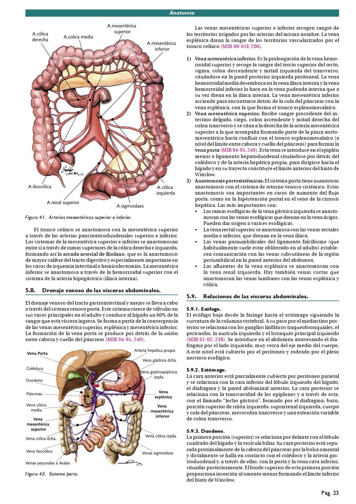 Vena esplénica izquierda hipertensión de la vena renal