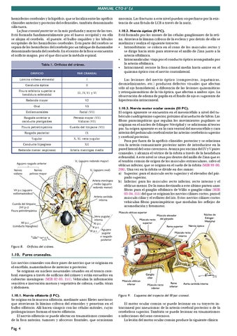 CTO Anatomia by Agustin Diaz - issuu