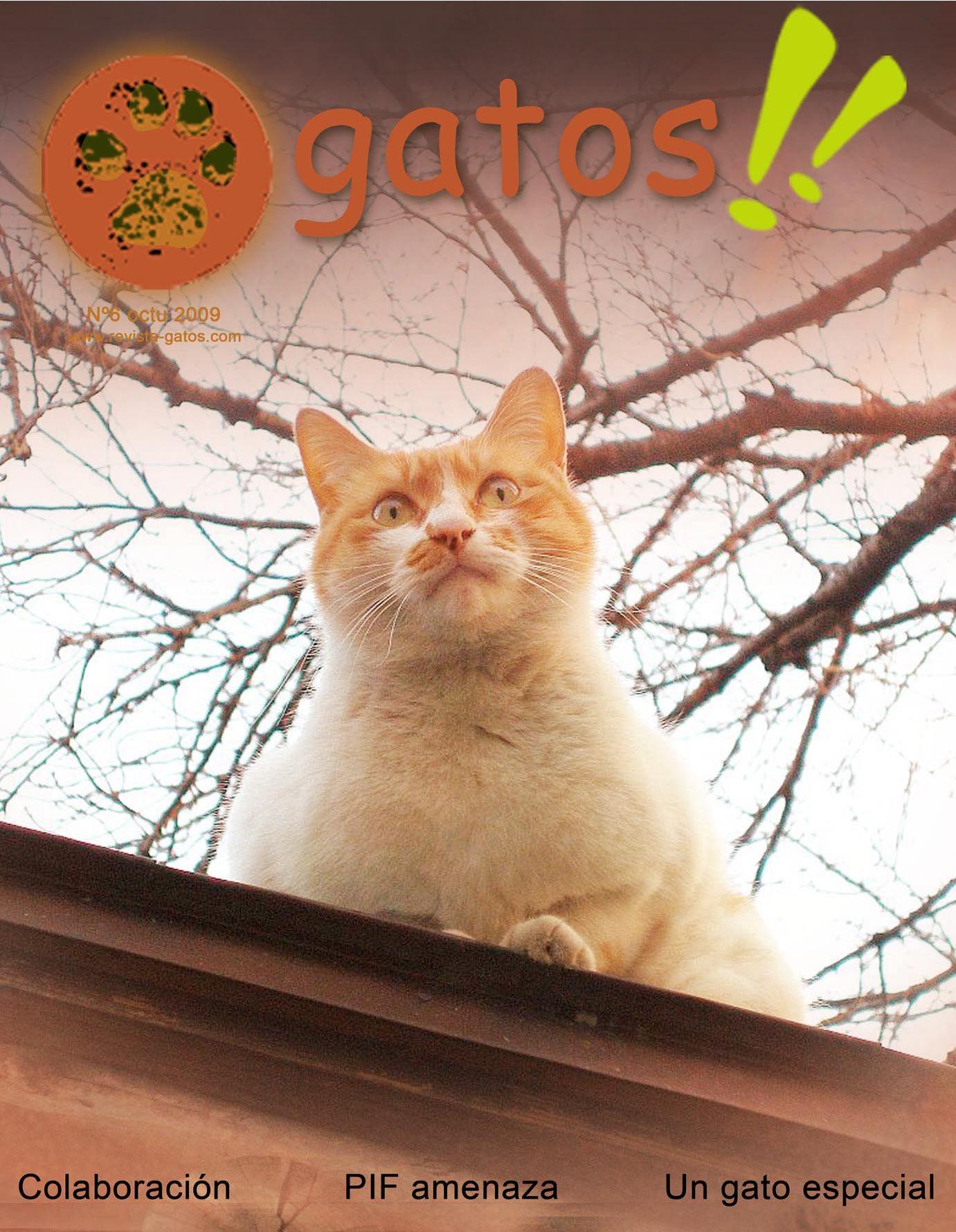 Revista Gatos N 6 by Revista Gatos - issuu