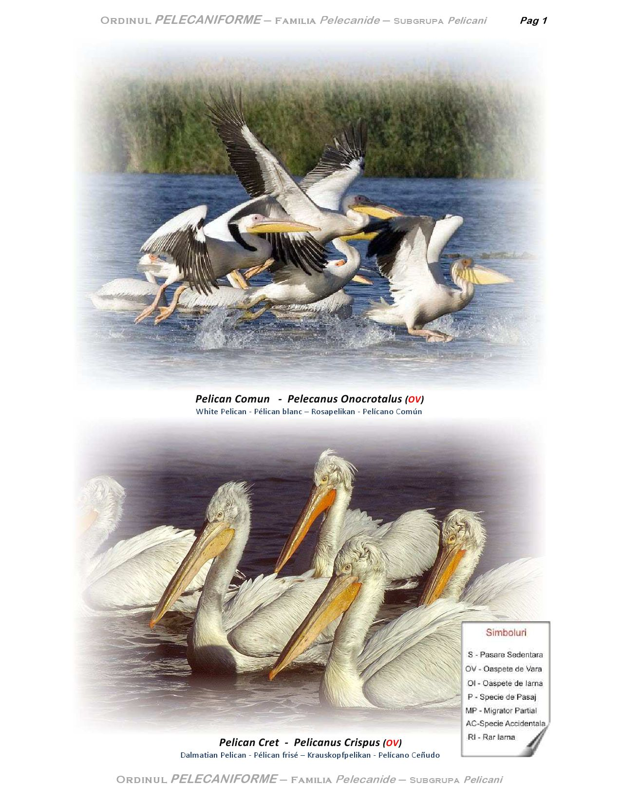 Birds in Danube Delta by Dan Simi - issuu