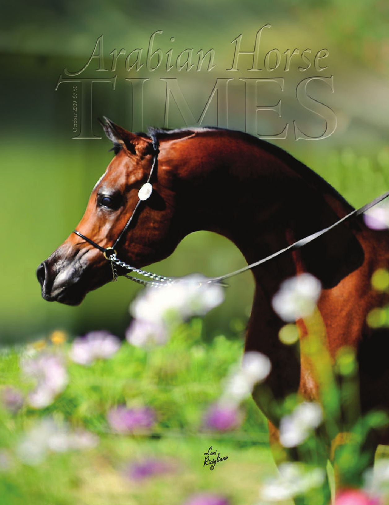 equestrian by united states equestrian federation inc issuu