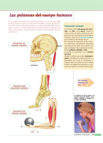 Anatomia y fisiologia by jose luis - issuu