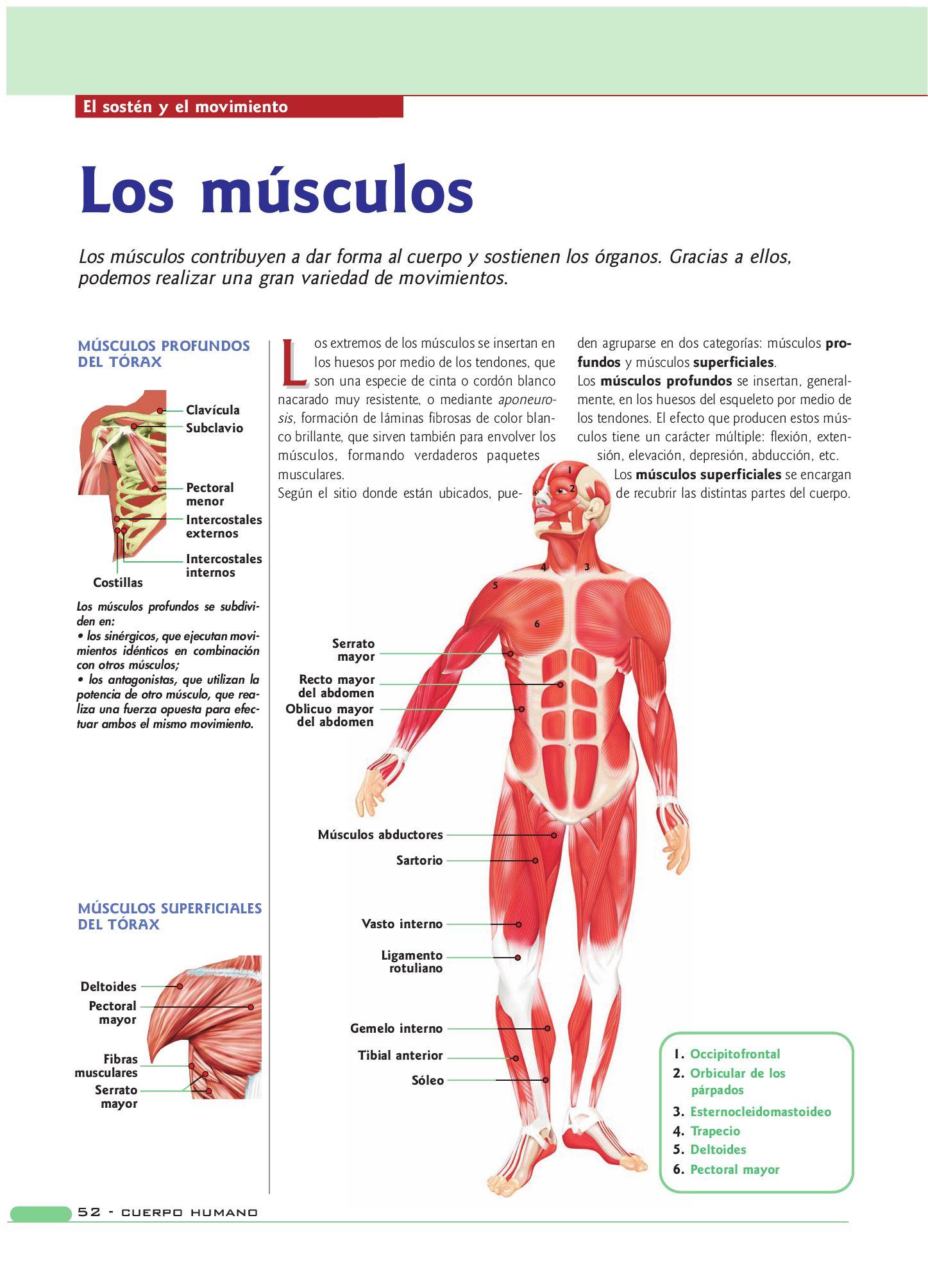 Bonito Fundido De La Anatomía Bruto Imágenes - Imágenes de Anatomía ...