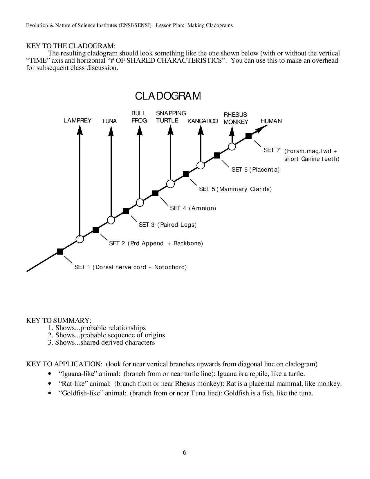 Cladogram worksheet transportation answers