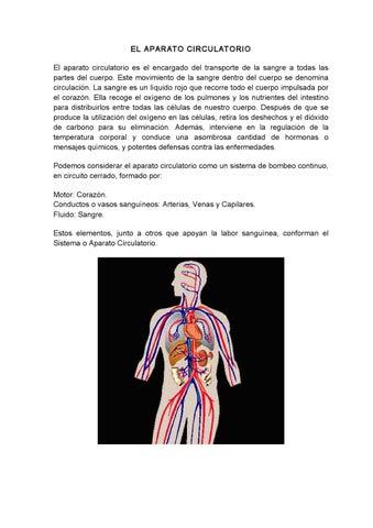 Circuito Circulatorio : El aparato circulatorio by jose santos issuu