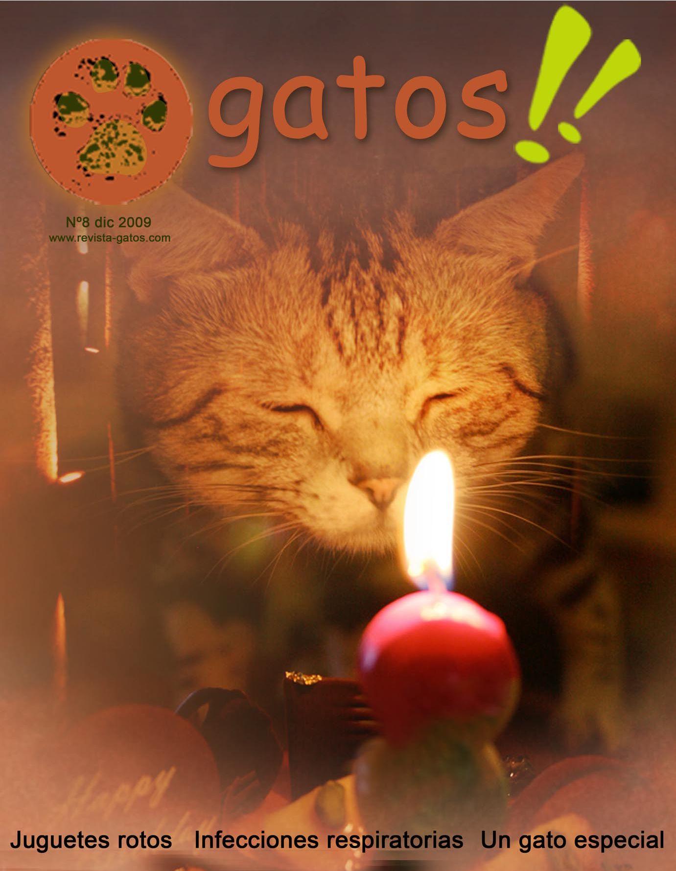 Revista Gatos N 8 by Revista Gatos - issuu