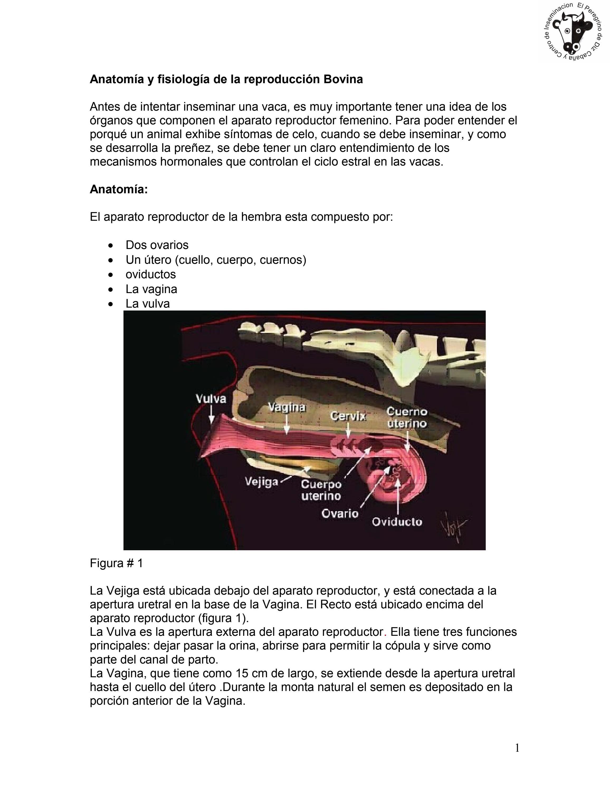 Manual de Deteccion de Semen e Inseminacion artificial by Lisselotte ...