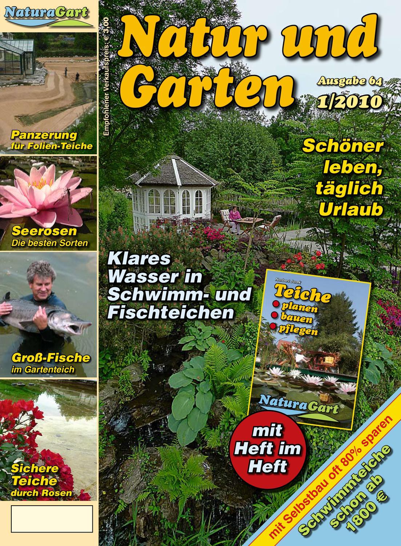 Am Garten Teich oder in der Sitzecke dekorative Staude i FLATTER-BINSE !i Samen