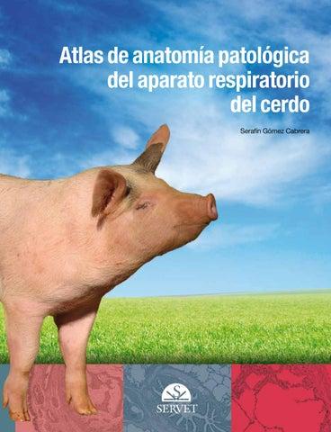 Atlas de anatomía patológica del aparato respiratorio del cerdo by ...