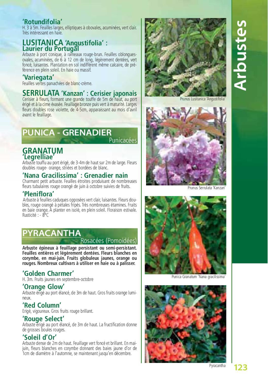 Arbuste Nain Persistant Plein Soleil le botanique, catalogue de kerisnel les pépinières