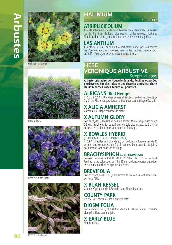 le botanique, catalogue de kerisnel les pépinièresexpression - issuu