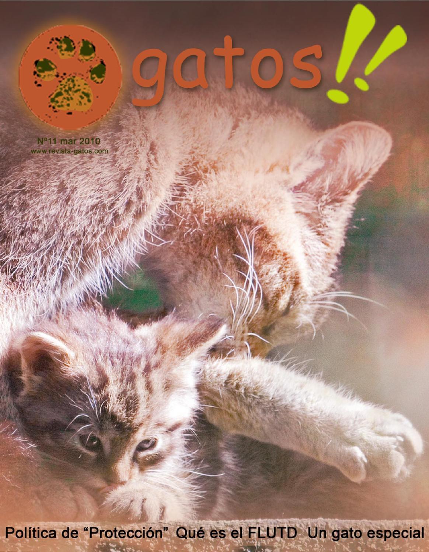 Revista Gatos N 11 by Revista Gatos - issuu