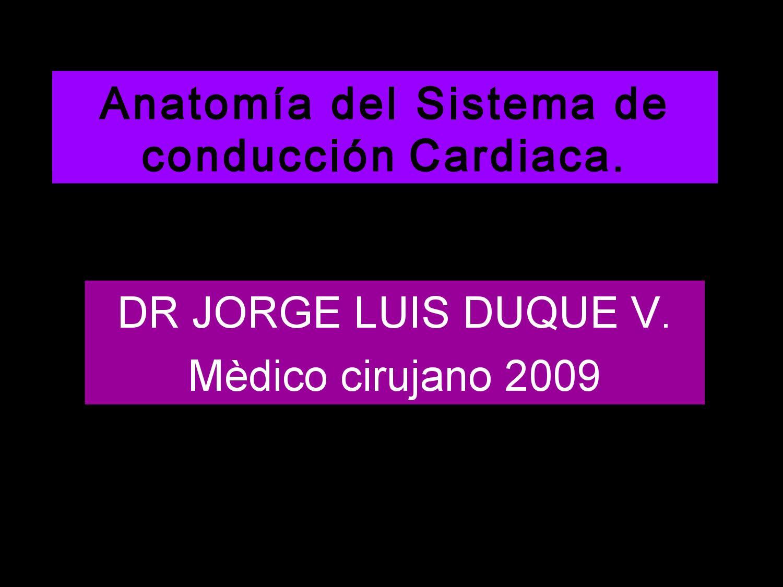 ANATOMIA SISTEMA CONDUCCION CARDIAACA by JORGE LUIS DUQUE VALENCIA ...