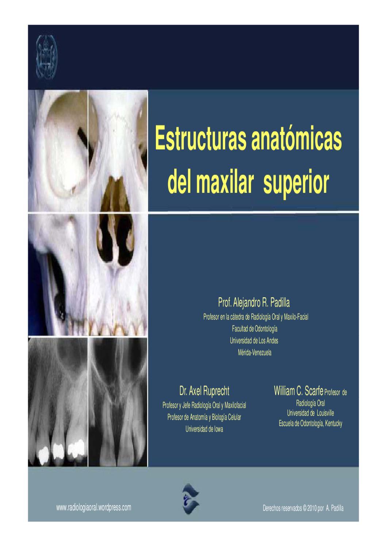 ANATOMIA RADIOGRAFICA DEL MAXILAR SUPERIOR by Alejandro Padilla - issuu
