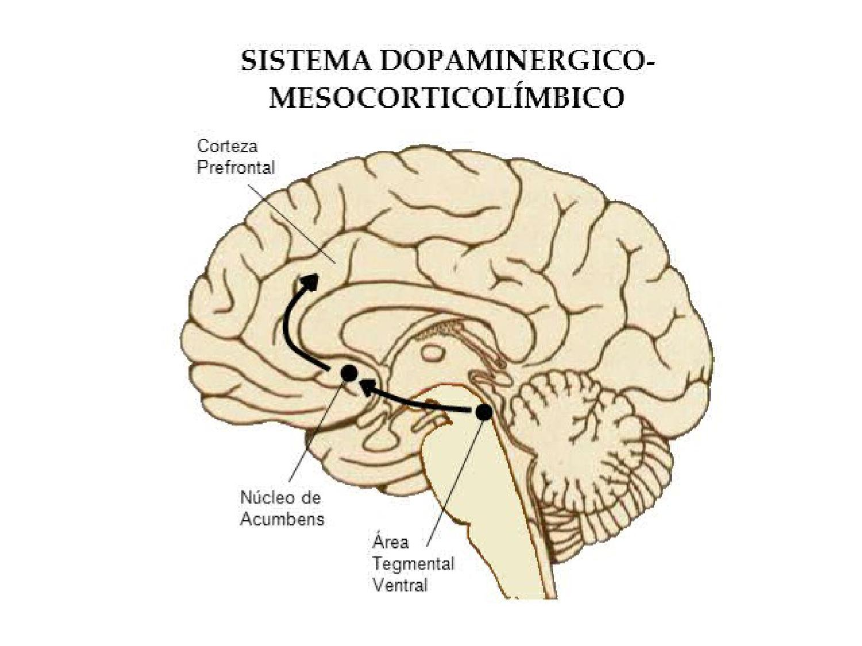 Ruta mesocorticolimbica