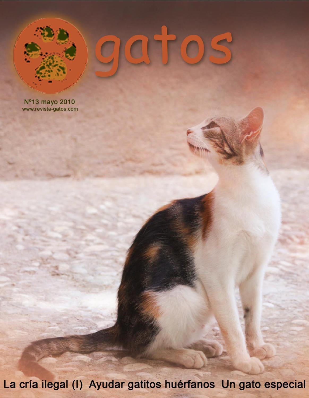 Revista Gatos N 13 by Revista Gatos - issuu