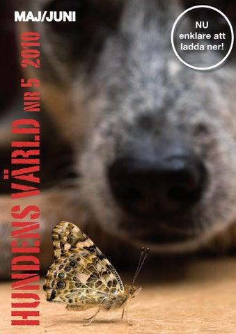Har avlivas tusentals vakthundar