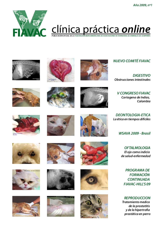 signos de prostatitis canina