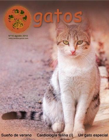 Revista Gatos N16 by Revista Gatos - issuu