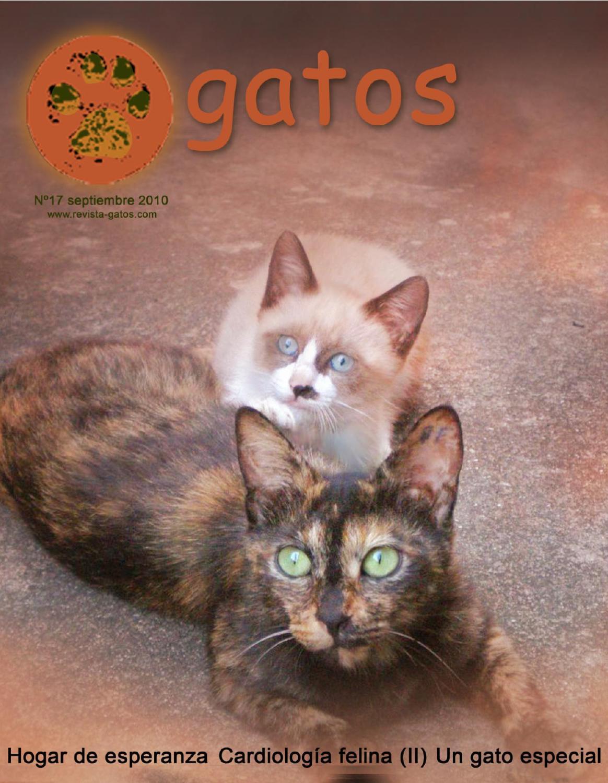 Revista Gatos N 17 by Revista Gatos - issuu