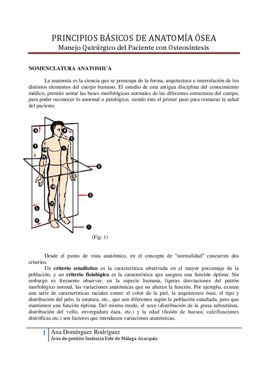 Anatomia II by formacion axarquia - issuu