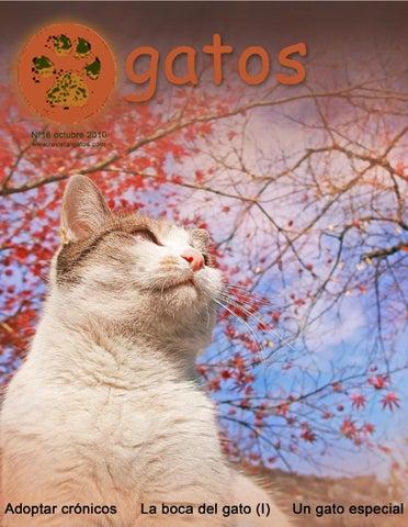 Revista Gatos N 18 by Revista Gatos - issuu