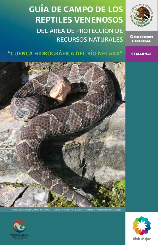 Guía de Serpientes by EBDL DL - issuu