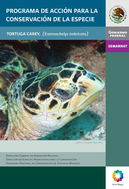 Programa de Acción para la Conservación de la Especie Tortuga Carey ...