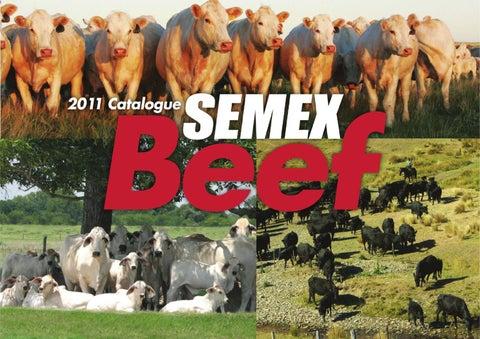 2011 Beef Catalogue by Semex - issuu