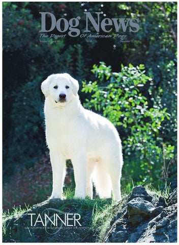 3acccf4dec5e Dog News