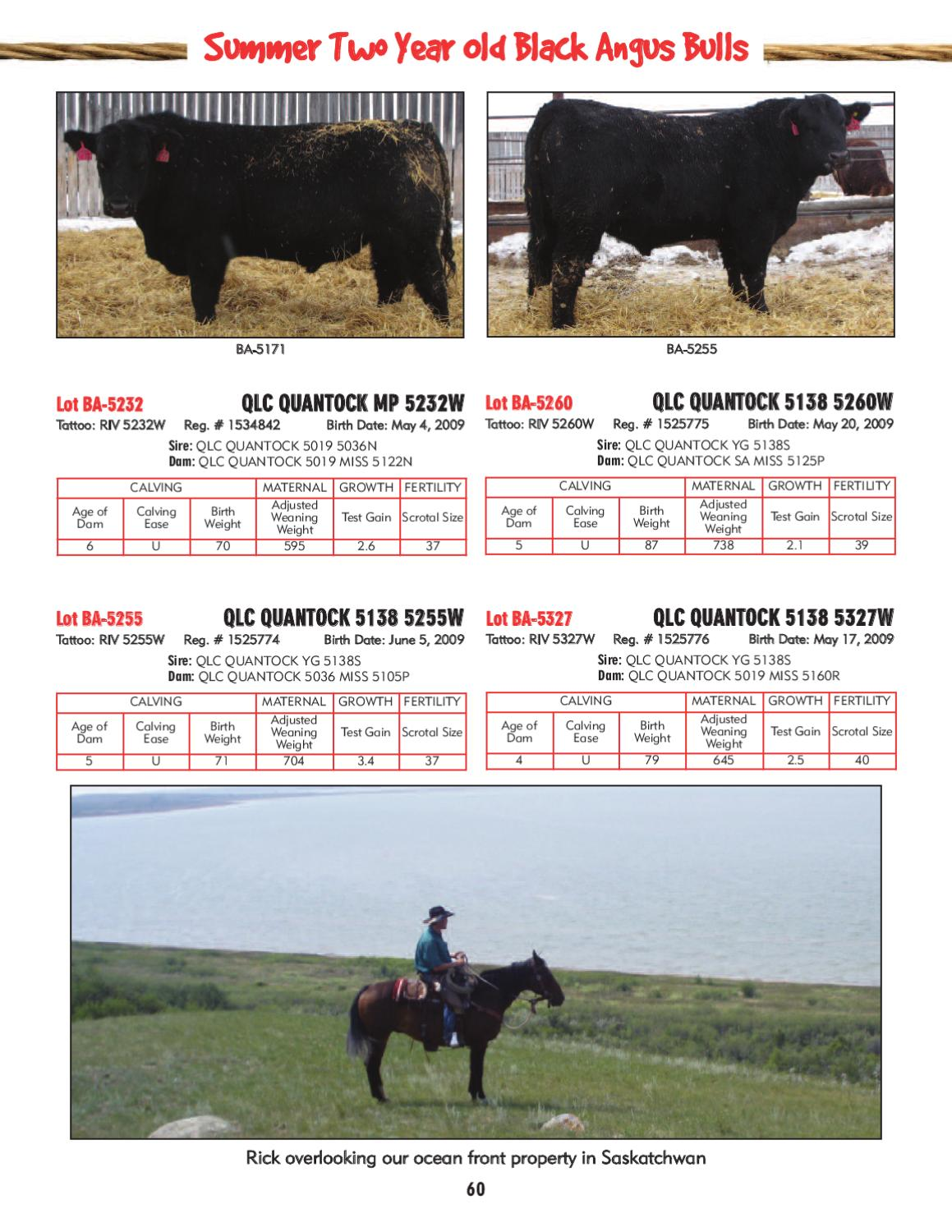MC Quantock Bull Sale by Today's Publishing Inc  - issuu