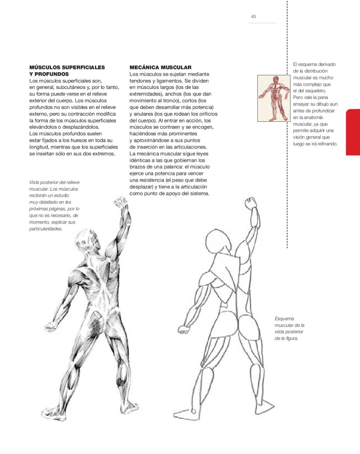 Drawing Class - Drawing the Human Anatomy by Parramón ediciones ...