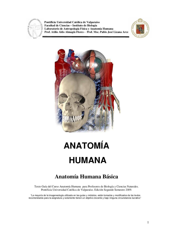 Anatomía Humana by Irene Sánchez - issuu