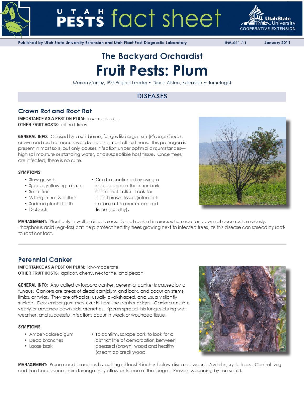 plum by utah state university extension issuu