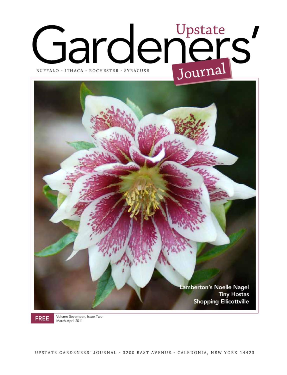 butterfly wall decor winky crafts.htm upstate gardeners  journal march april 2011 by upstate gardeners  upstate gardeners  journal march april