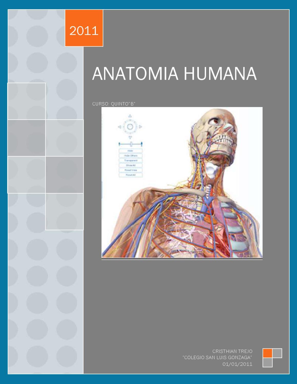 anatomia humana by Cristhian Trejo - issuu