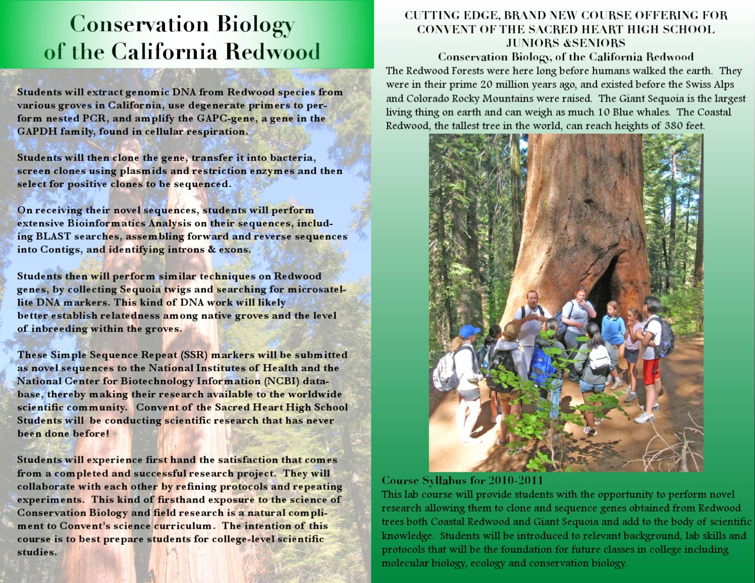 Conservation Biology of the California Redwood by Caitlin