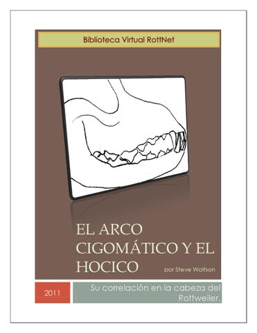 El Arco Cigomático y el Hocico by Rott Net - issuu