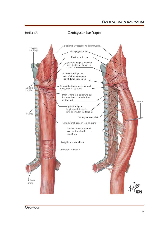 Netter Gastroenteroloji By Nobel Tip Kitabevi Ltd Issuu