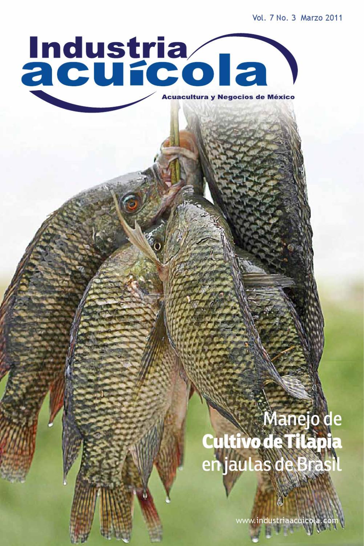 Industria acu cola vol 7 3 by aqua negocios sa de cv issuu for Engorda de tilapia en estanques rusticos